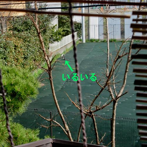 c0211810_9121267.jpg