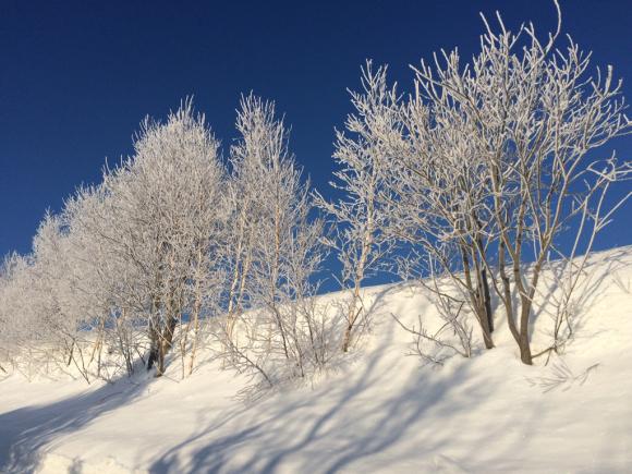 素敵な冬景色。_f0096216_08570028.jpg