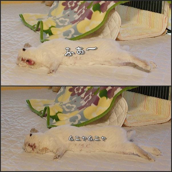 名古屋ウィメンズマラソン_e0231624_15445866.jpg