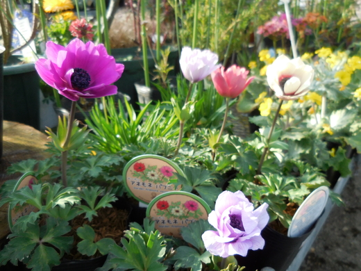 お庭をすてきにする植物が入荷しています!_f0139333_1105164.jpg