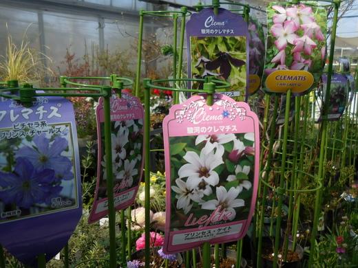 お庭をすてきにする植物が入荷しています!_f0139333_1126100.jpg