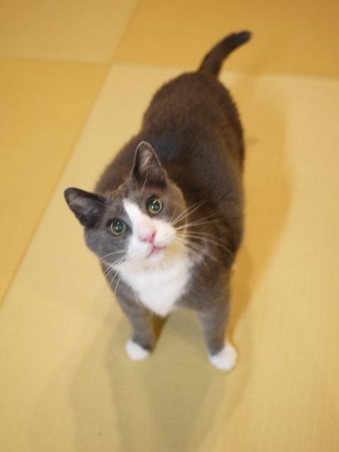 猫のお留守番 カン太くんルノーちゃん編。_a0143140_21444612.jpg