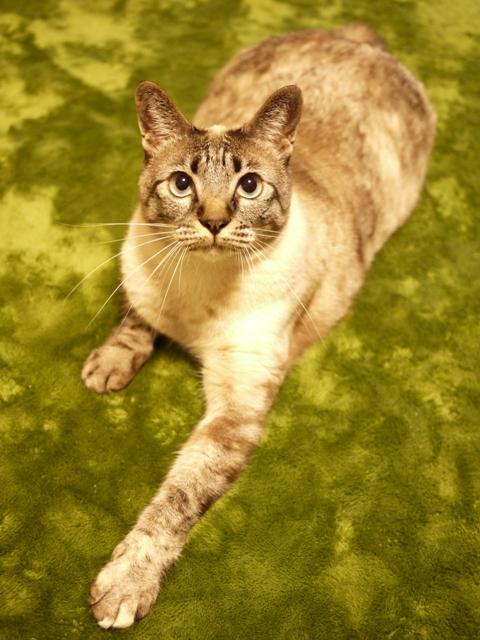 猫のお留守番 カン太くんルノーちゃん編。_a0143140_21452235.jpg
