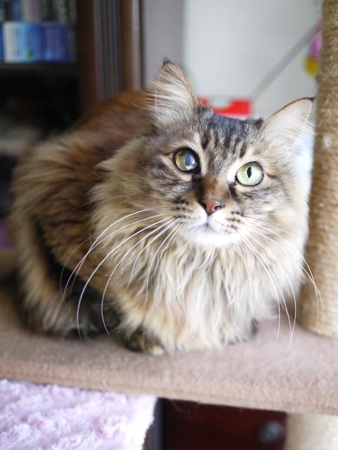 猫のお留守番 メイちゃんポポちゃんラッキーくん編。_a0143140_2157255.jpg