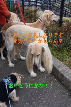 d0013645_16023450.jpg