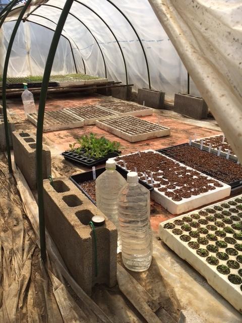 今朝は苗床と畑 ロストしたトマトの種の代わりの種を揃えにお店に  収穫もあったので猛ダッシュ作業でした_c0222448_11530742.jpg