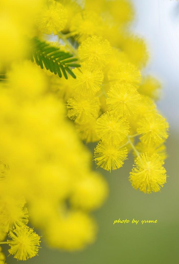 spring scenery_a0322950_16411570.jpg