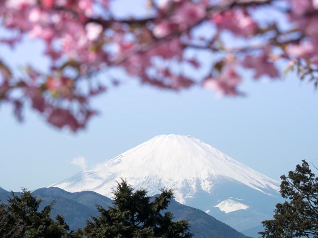 富士山と河津桜_a0257652_1764823.jpg