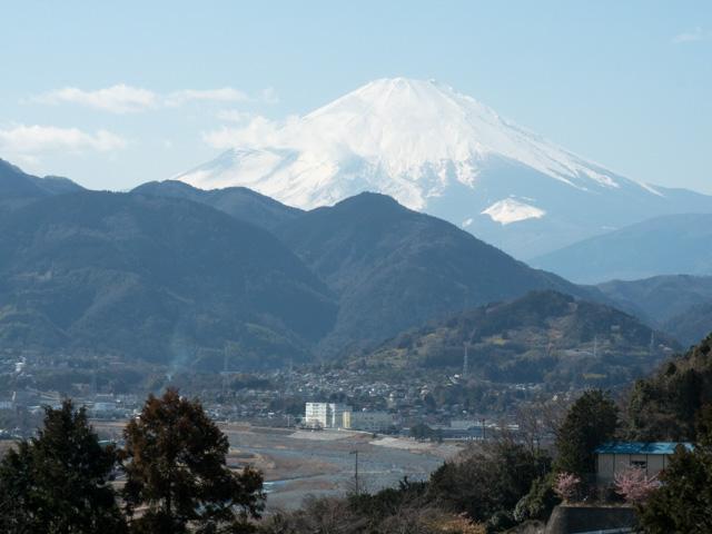 富士山と河津桜_a0257652_177098.jpg