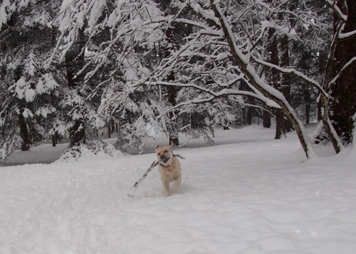本日もまた雪_e0192217_2040165.jpg