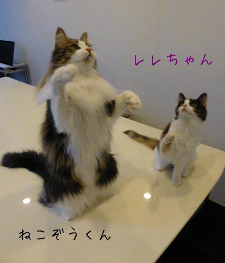 お留守番 にゃんこ ギャラリー 【February】_e0237625_12235340.jpg