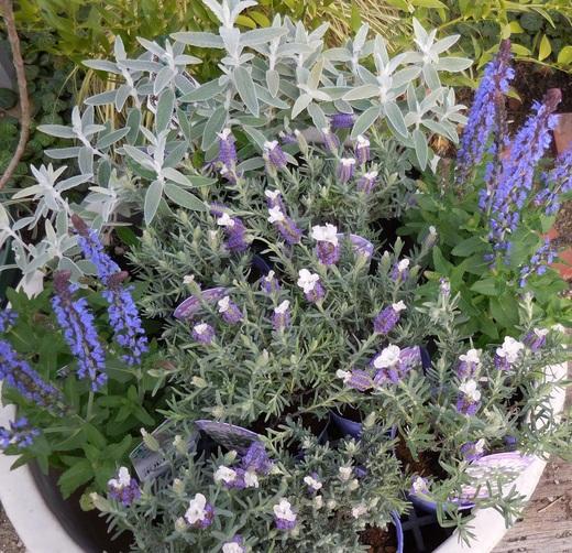 お庭をすてきにする植物が入荷しています!_f0139333_18121082.jpg