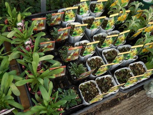 お庭をすてきにする植物が入荷しています!_f0139333_18123914.jpg