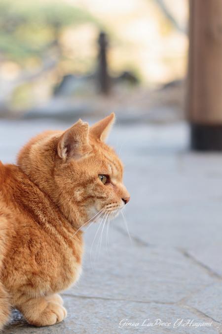 猫のいる風景 日比谷公園 横からのチャッピー_b0133053_0473329.jpg