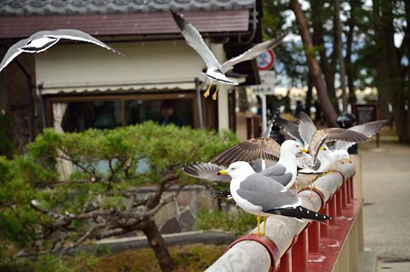 建物探訪 「黒谷和紙にふれ 宮津の街をめぐる」_e0164563_9495321.jpg