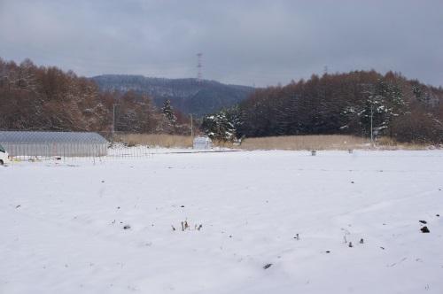 3月の雪と最近の苗_c0110869_10352415.jpg