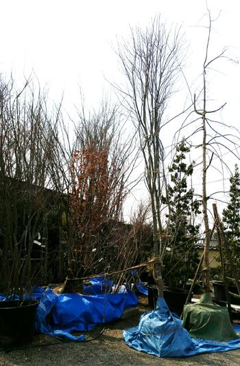 木々に彩られた暮らし 川島の家*お庭工事_d0080906_13591523.jpg