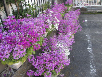 今年の春は早い!_e0150006_15495098.jpg