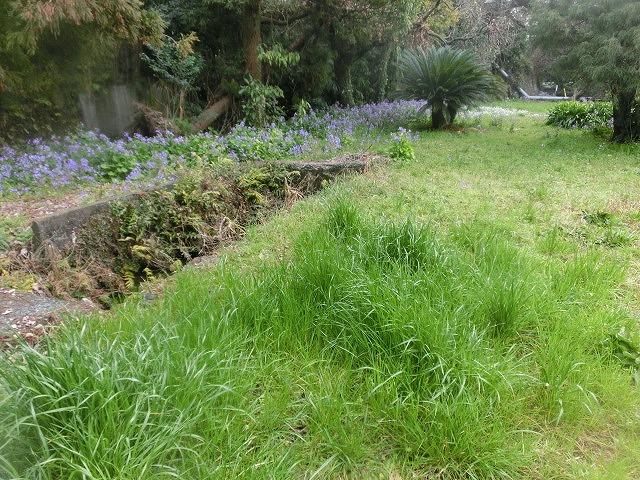 いよいよ春が目に見えてきた 今年最初の「田宿川の川そうじ」_f0141310_72721100.jpg