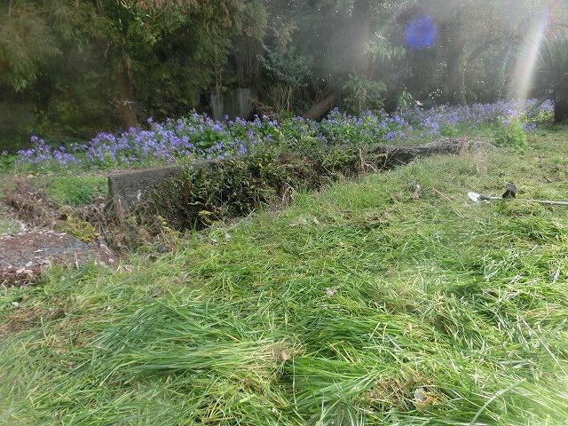 いよいよ春が目に見えてきた 今年最初の「田宿川の川そうじ」_f0141310_7273024.jpg