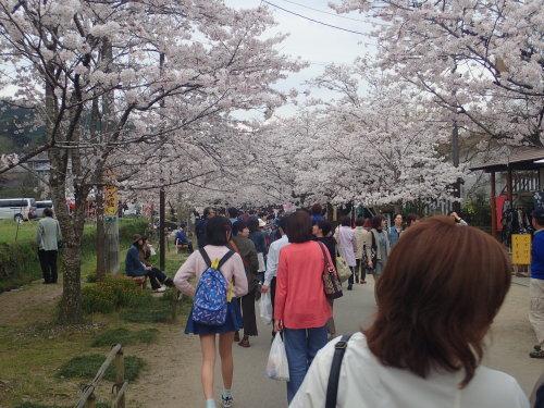 桜 咲く!_a0315918_18383059.jpg