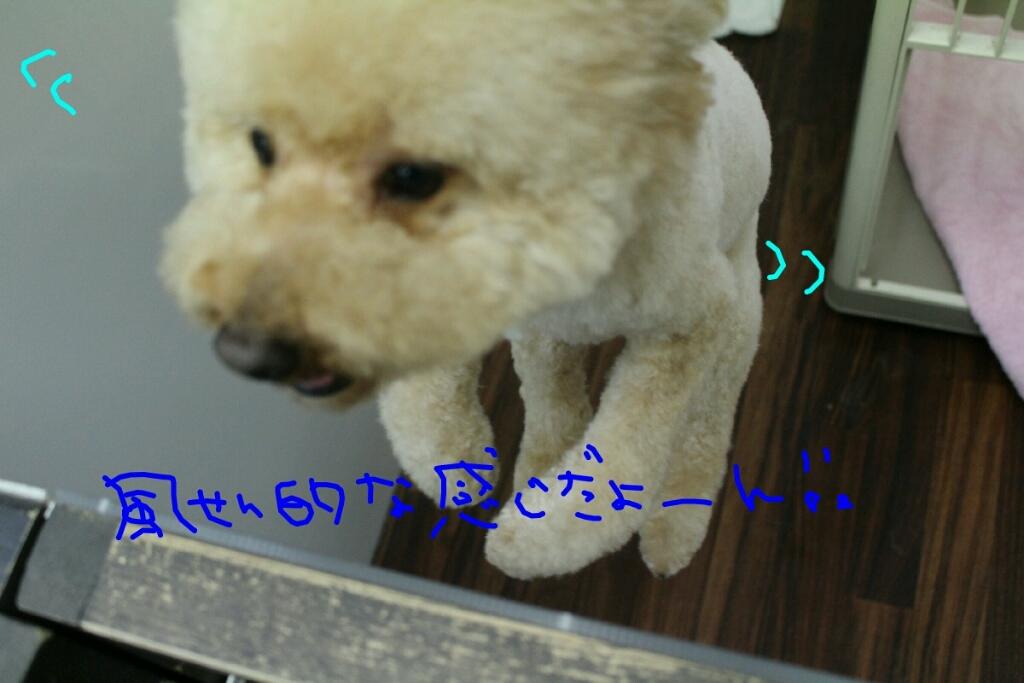 b0130018_20531898.jpg