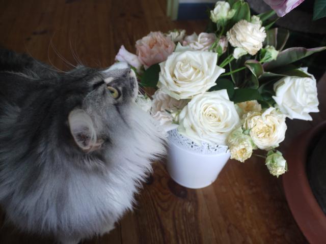 ホワイトデーのバラとウーラちゃん!_e0356356_14354006.jpg