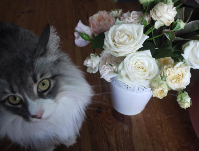 ホワイトデーのバラとウーラちゃん!_e0356356_14360574.jpg