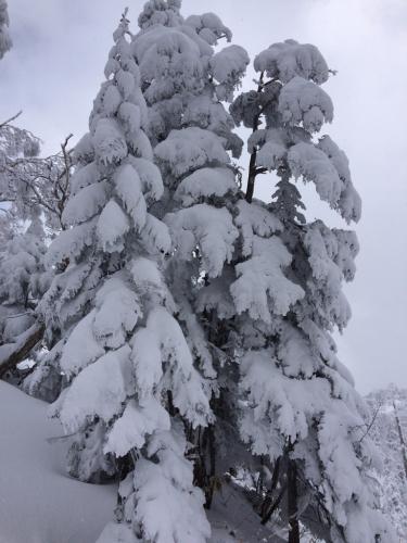 苗場に冬が戻ってきた!(≧∇≦)_c0151965_22335084.jpg