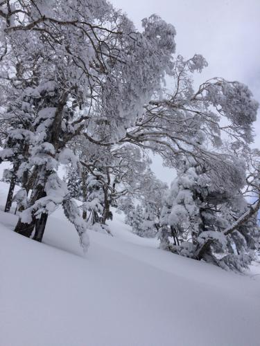 苗場に冬が戻ってきた!(≧∇≦)_c0151965_22335157.jpg