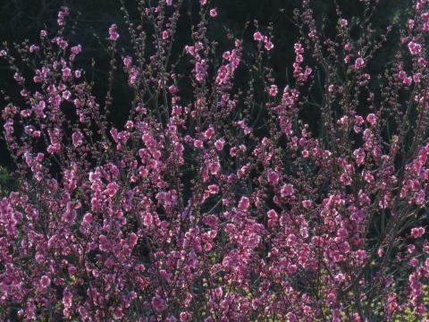 逆光の春_a0351368_21542619.jpg