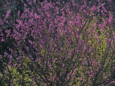 逆光の春_a0351368_21555930.jpg