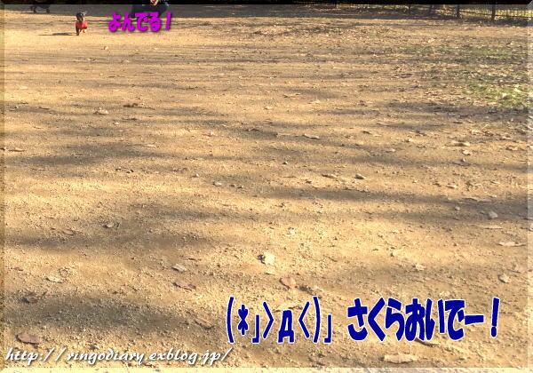 b0016976_1145074.jpg