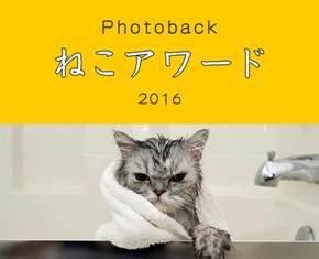 2016/4/27-5/2 『Photoback ねこアワード 2016』_e0091712_22512391.jpg
