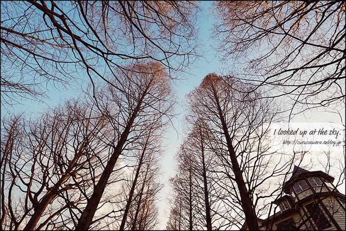 空を見上げて_f0100215_21540119.jpg