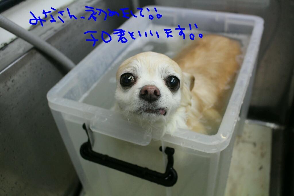 b0130018_20124713.jpg