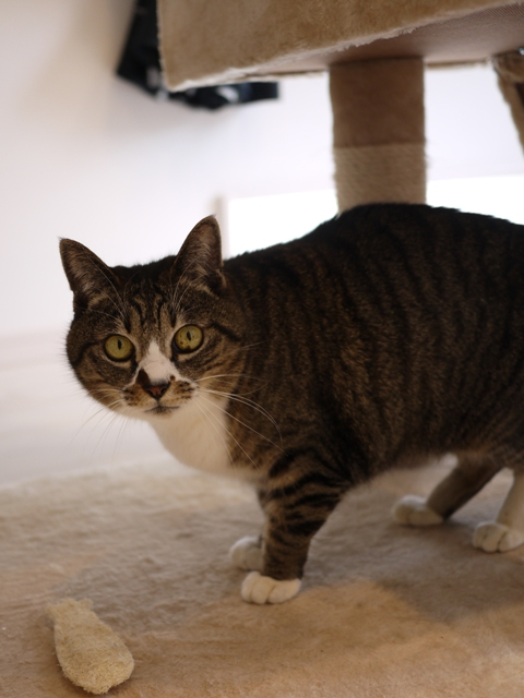猫のお留守番 お嬢ちゃん姫ちゃんシオンくんJくん人志くんクロンボちゃん編。_a0143140_21223632.jpg
