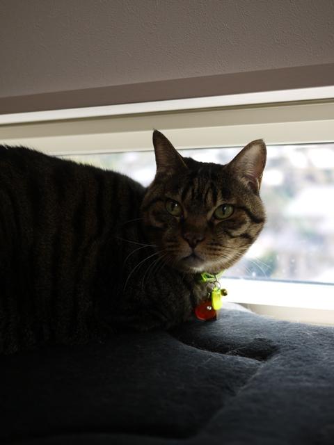 猫のお留守番 お嬢ちゃん姫ちゃんシオンくんJくん人志くんクロンボちゃん編。_a0143140_212330100.jpg