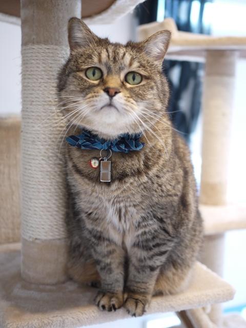 猫のお留守番 お嬢ちゃん姫ちゃんシオンくんJくん人志くんクロンボちゃん編。_a0143140_21234881.jpg