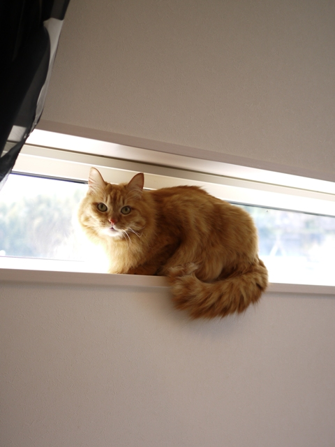 猫のお留守番 お嬢ちゃん姫ちゃんシオンくんJくん人志くんクロンボちゃん編。_a0143140_2123495.jpg