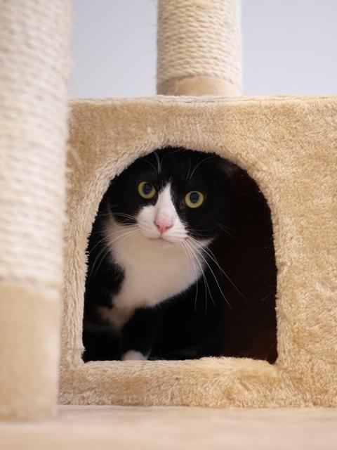 猫のお留守番 お嬢ちゃん姫ちゃんシオンくんJくん人志くんクロンボちゃん編。_a0143140_21243337.jpg