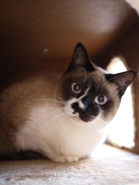 猫のお留守番 お嬢ちゃん姫ちゃんシオンくんJくん人志くんクロンボちゃん編。_a0143140_2124821.jpg