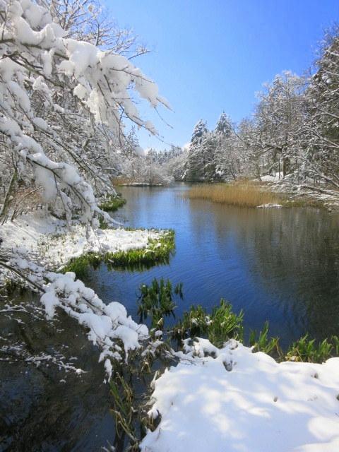 雪景色の雲場池*上雪(かみゆき)_f0236260_14474378.jpg
