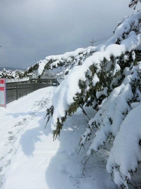 雪景色の雲場池*上雪(かみゆき)_f0236260_14501064.jpg