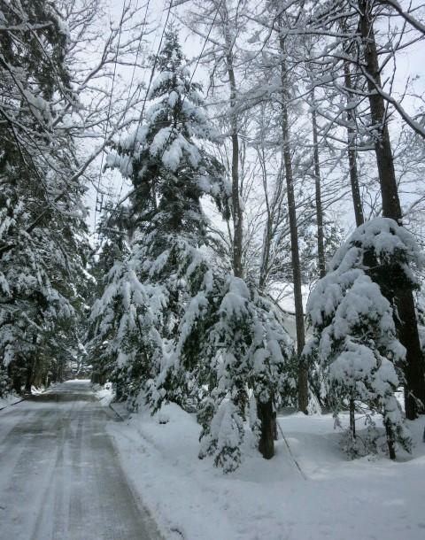 雪景色の雲場池*上雪(かみゆき)_f0236260_14541987.jpg