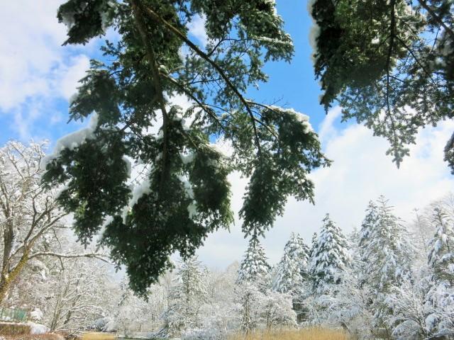 雪景色の雲場池*上雪(かみゆき)_f0236260_15153638.jpg