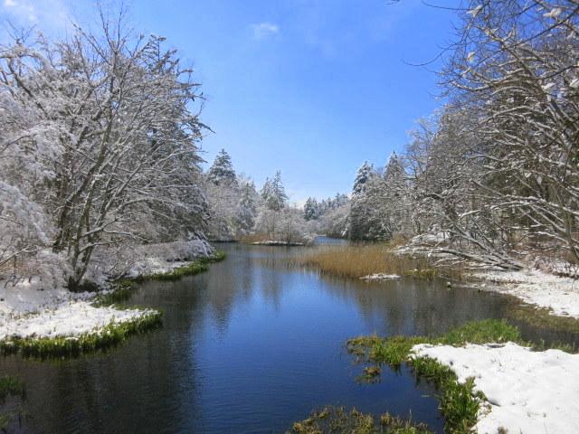 雪景色の雲場池*上雪(かみゆき)_f0236260_15231334.jpg