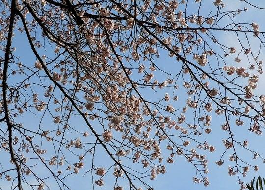 路傍の花、樹々の鳥(109) ~ 一足早く ・・・ ~ _b0102572_1815275.jpg