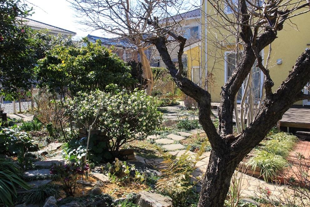 庭にも『春の訪れ』_a0107574_18455313.jpg