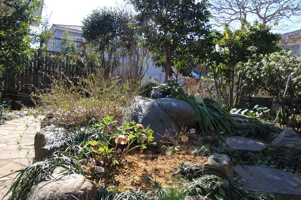 庭にも『春の訪れ』_a0107574_18460206.jpg